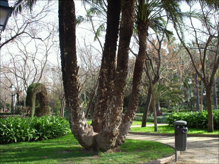 Callejeando a la luna de valencia los jardines del real Viveros y jardines